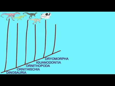 PL EXAM 2: ORNITHOPOD CLADOGRAM.avi