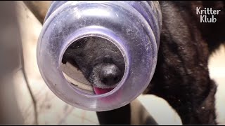 Dog Who Got His Face Stuck In A Plastic Bottle Wants To Be Loved Like Others | Kritter Klub
