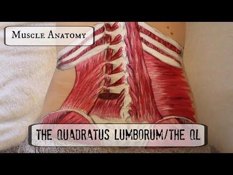 Muscle Anatomy: THE QL!!