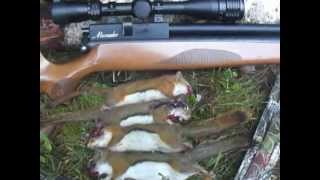 Red Squirrel Hunt With Marauder .25 Thumbnail