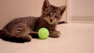 Слепой котенок Оскар и его первая игрушка