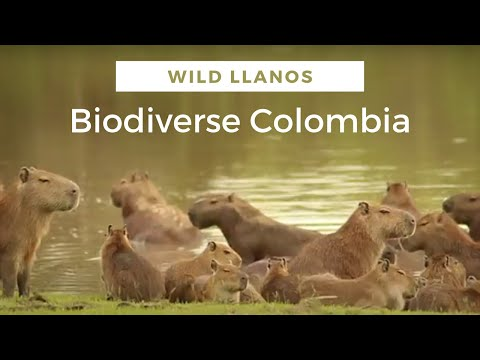 Colombia's East teems with exotic wildlife