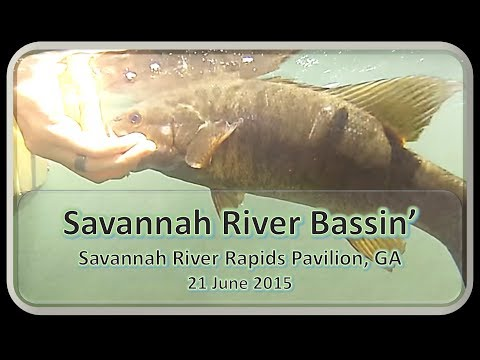 Bass Fishing Largemouth, Smallmouth, and Redeye from Kayak on the Savannah River, 21 June 2015