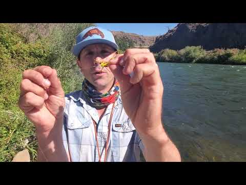 Weekly Fishing Report // Hopper Tip For Smart Trout