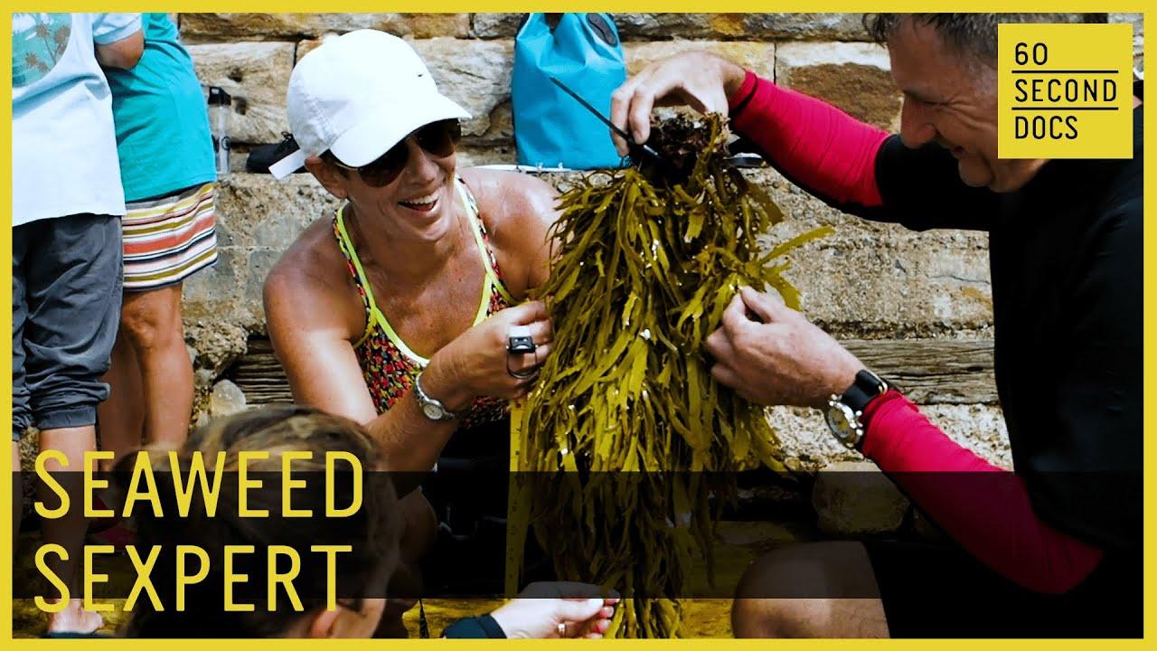 Seaweed Sex Therapist | Operation Crayweed