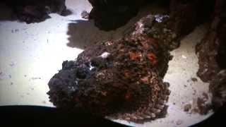 To żyje w morskich głębinach! [Enigma]