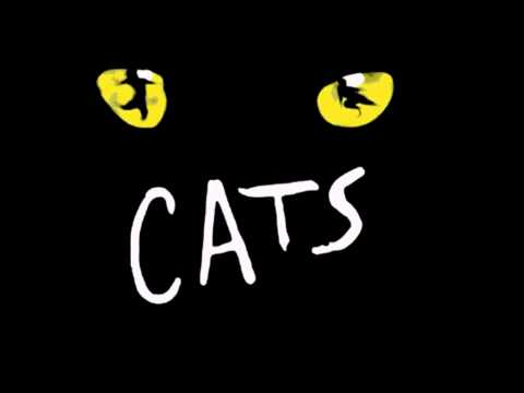 Cats in Mexico- Macavity the mysterie cat