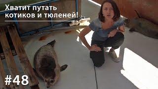 Хватит путать котиков и тюленей! // Всё как у зверей #48
