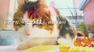 OLYMPUS PEN × PhotoCinema プロジェクトで生まれたフォトシネマ「いた...