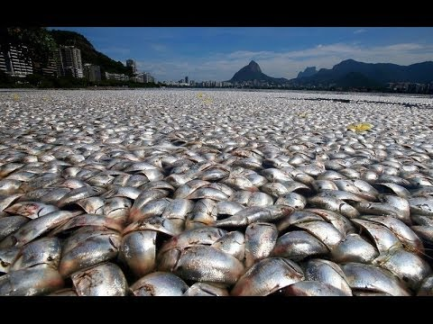 THOUSANDS OF DEAD FISH WASH UP ON RODRIGO DE FREITAS LAGOON, BRAZIL SHORES TUESDAY (MAR 14, 2013)