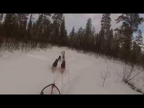 Hundekjøring Troms