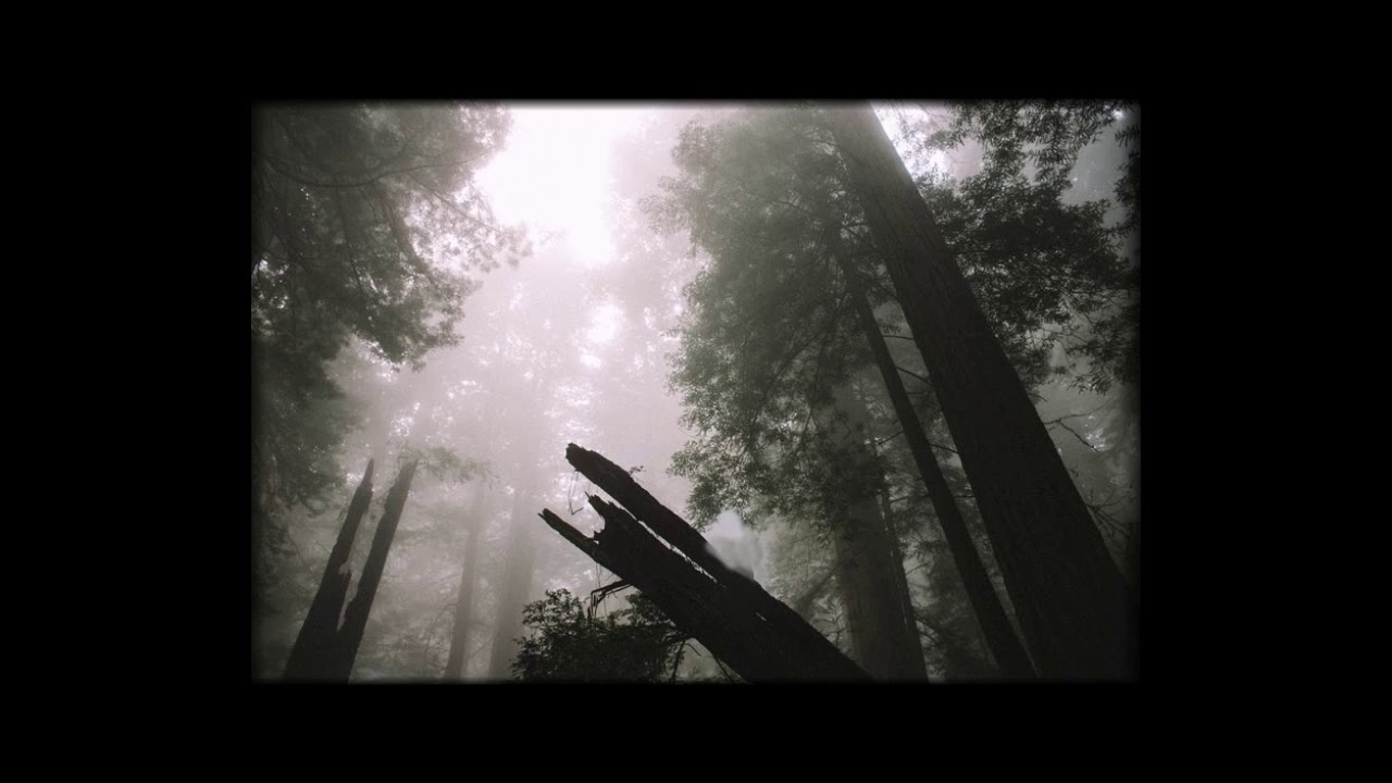 Coalescer - It Has Started In A Forest