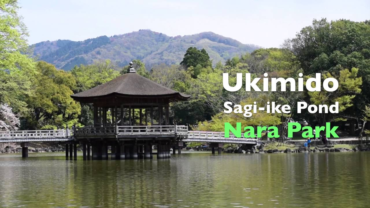 Sarusawa Pond in Nara - Nara - Japan Travel - Japan Tourism Guide ...