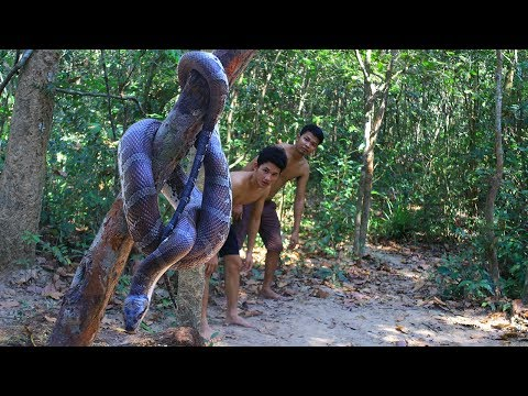 Unbelievable Catch and Cook Big Snake In Forest Eating Delicious