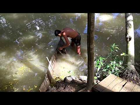 Fish Trapping In Bamboo Cage / Traditional Village Fishing / Tiny Fish Catching System In Village