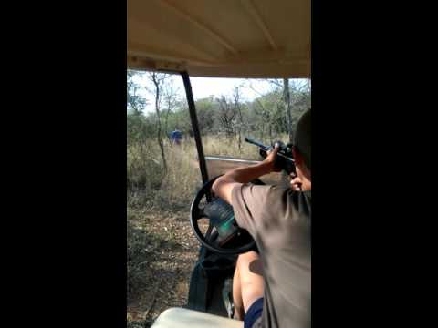Hunting elephant in South Africa