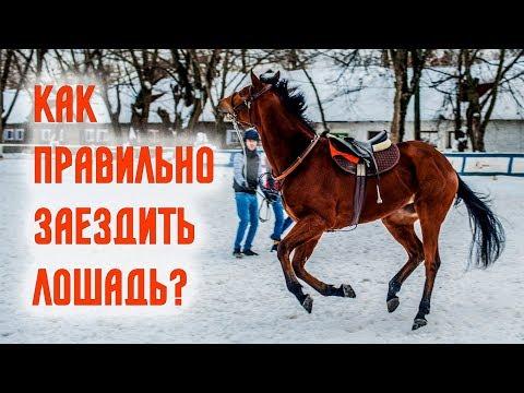 Вопрос: Как объездить лошадь?
