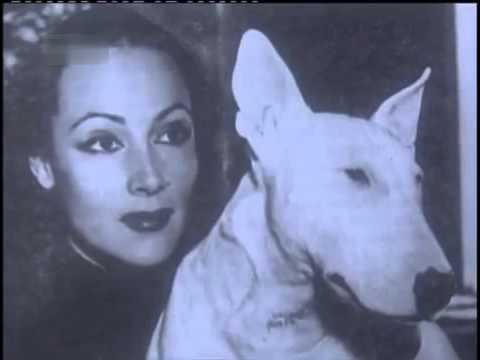 Bull Terrier (documentario completo italiano)
