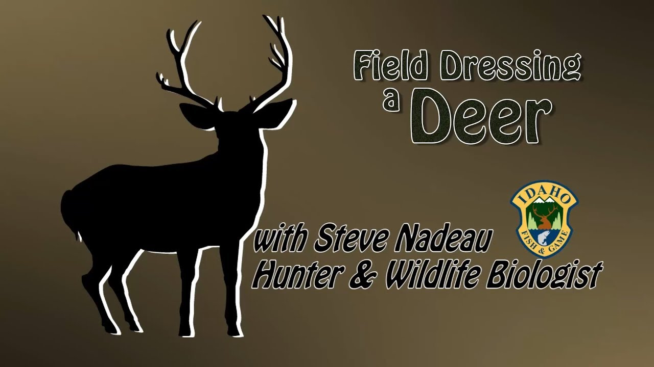 how to field dress a deer Ten steps to complete field dressing to field dress a deer, you'll need a sharp, sturdy knife wear a pair of shoulder-length plastic field-dressing gloves to.