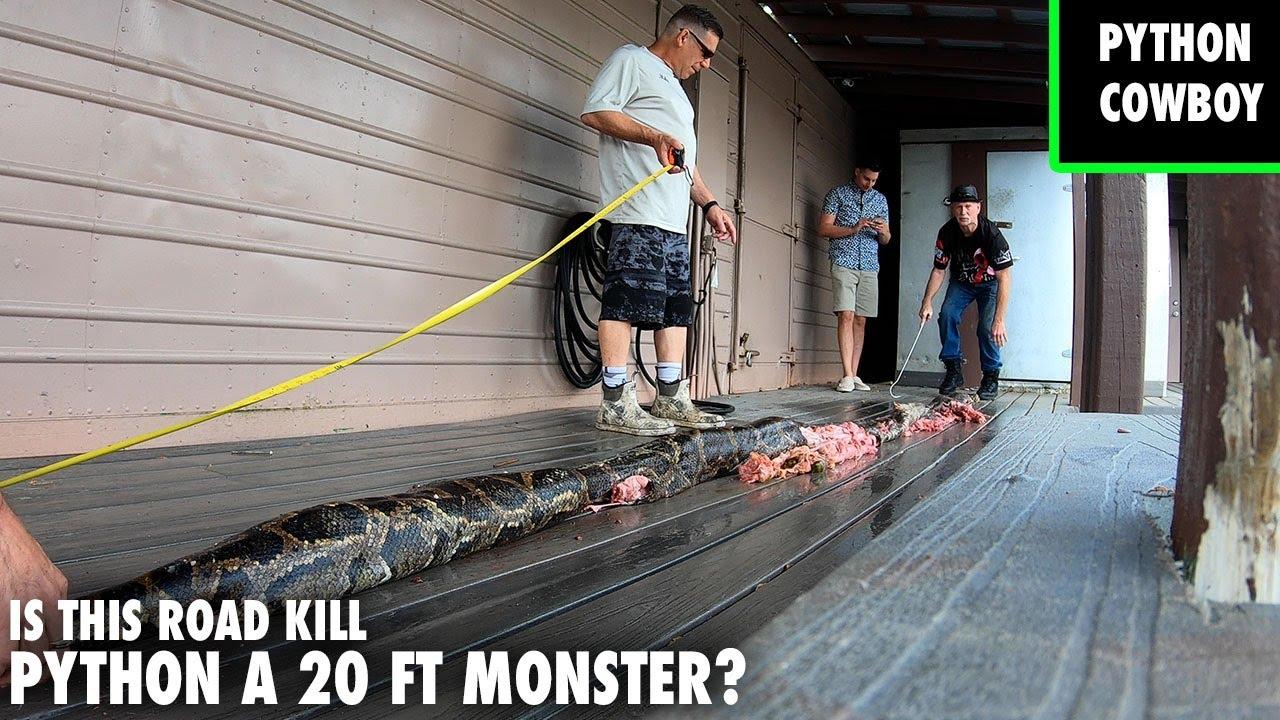 Florida Man Claims To Have 20 Ft 300 Pound Burmese Python