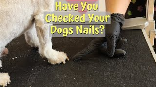 How To Trim Your Dog Nails And Why!
