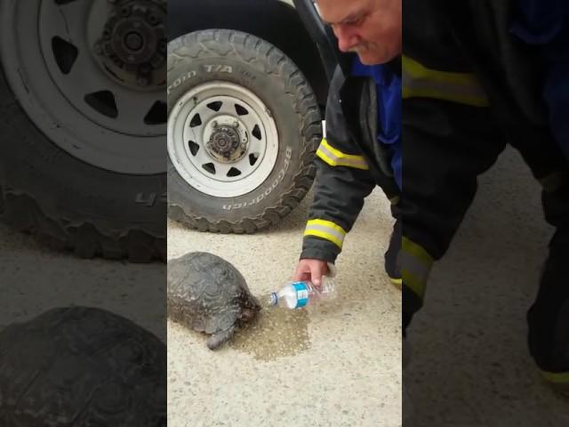 Firefighter revives tortoise he saved from #KnysnaFire