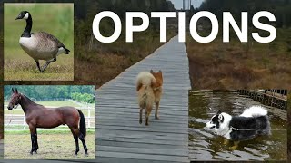 Finnish Spitz talks to goose and horses with best friend