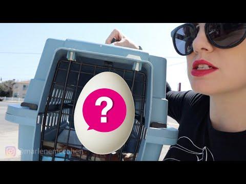 my-bird-laid-an-egg!