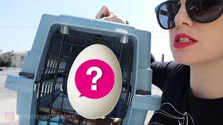 my-bird-laid-an-egg