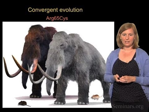 Convergent evolution across species - Hopi Hoekstra (Harvard/HHMI)