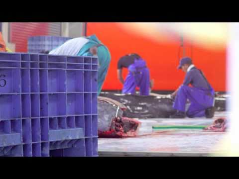 A Look Inside the Taiji Slaughterhouse