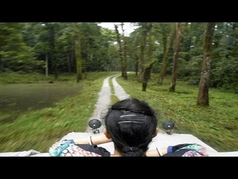 Gorumara National Park Car Safari full video | Dooars Gorumara Forest / Jungle Safari