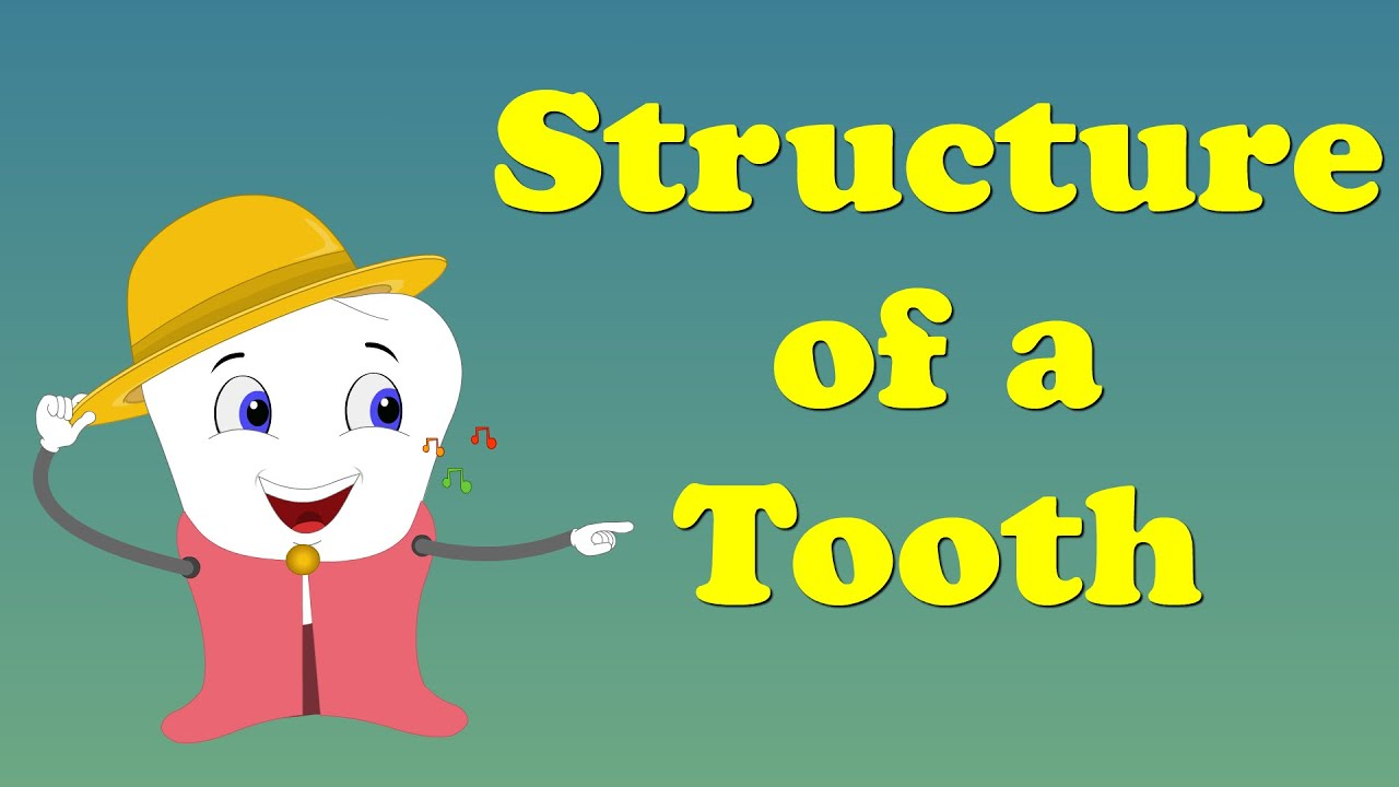 Tooth Structure for Kids | #aumsum #kids #education #science #learn ...