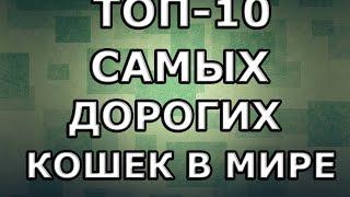 ТОП-10 САМЫХ ДОРОГИХ КОШЕК В МИРЕ™