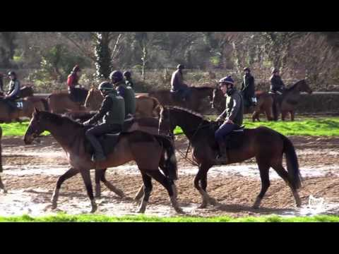 VIDEO: Willie Mullins on the horse he finds it hardest to watch at home
