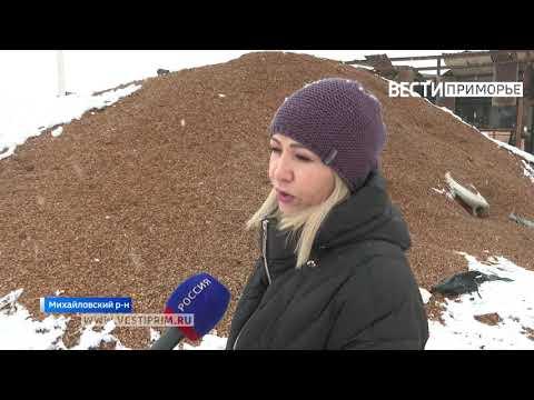 Производство кедровых орехов из Приморья выходит на мировой уровень