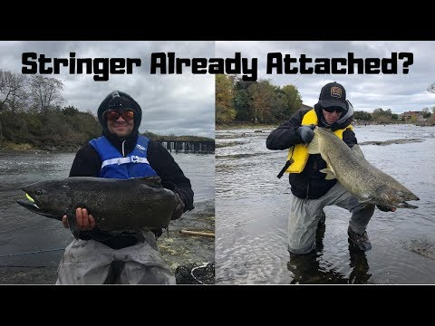 Insane Oswego Salmon Fishing 2018! (Short Version)