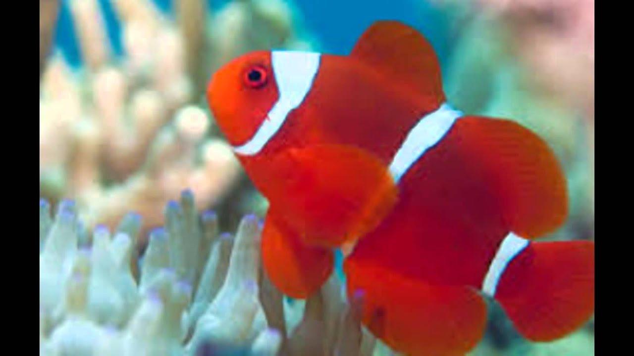 Fish Photos - YouTube