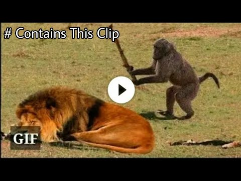 Funny animals ; Funny video 🐒