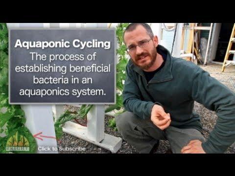 The Basics of Aquaponics System Cycling