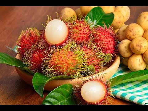 How to grow Rambutan Fruit tree