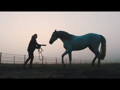 HORSES  | Blommers Feel Good Stables Promotion video | By Rein Martens