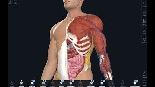 Complete Anatomy 2019 for Android Phone & Tablet