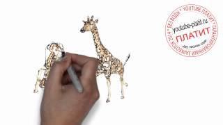Нарисованные карандашом животные  Как нарисовать трех жирафов