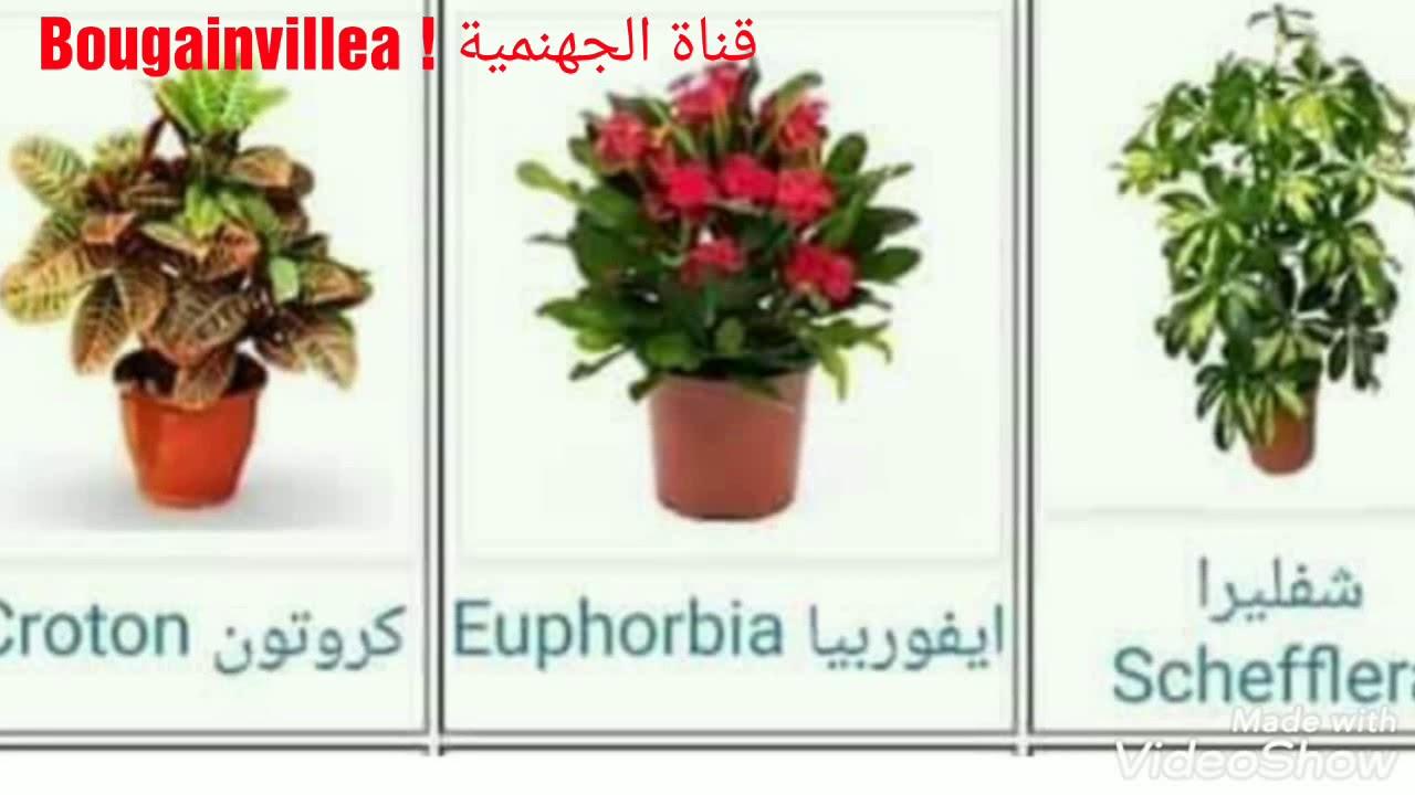 تعلم أسماء أشهر و أجمل نباتات الزينة المنزلية فيديومهم جدا Youtube