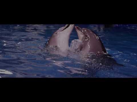 Dolphin Show Lebanon Beirut