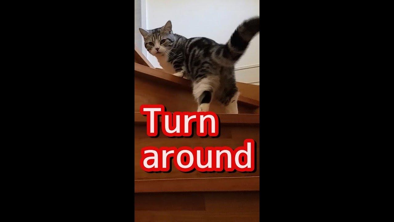 【ショート】変な方向転換をする猫 #shorts
