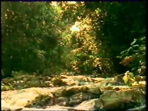 The Baka Tribe - Journey