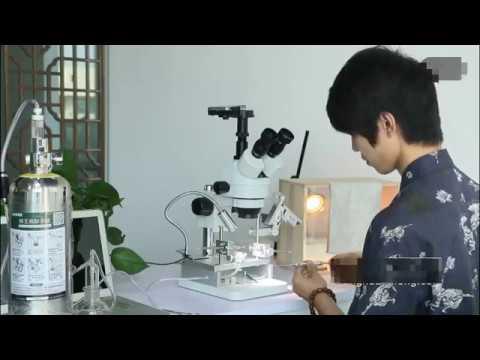Queen Bee Artificial Insemination Instrument