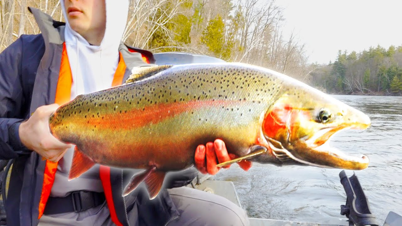 FIRST GIANT SPRING STEELHEAD OF 2021 - March Bobber Downs
